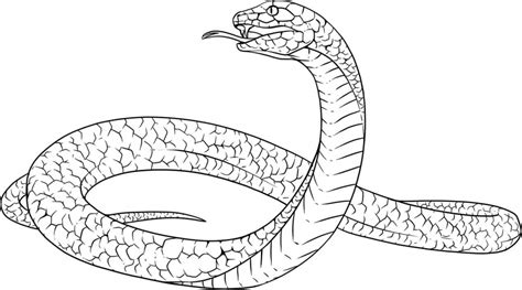 Black Mamba Coloring Pages snakes coloring