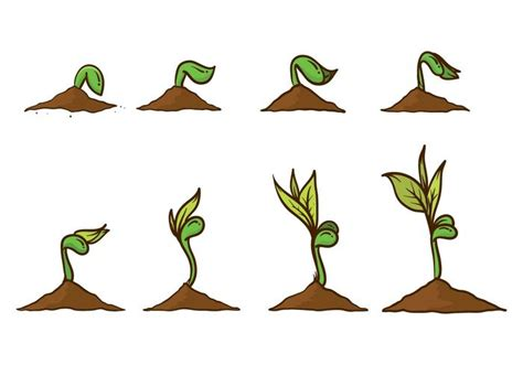 imagenes grow up grow up plant vector download free vector art stock