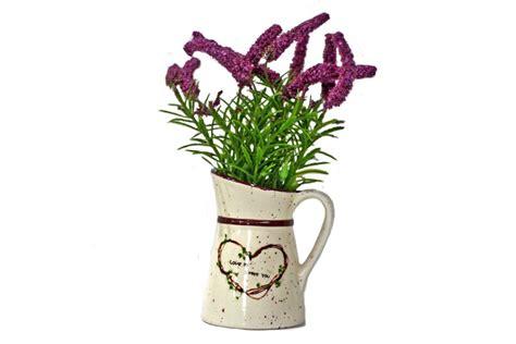gambar lavender bunga cantik kaya manfaat lintas asri