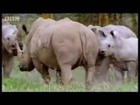graceful animal best animals mating