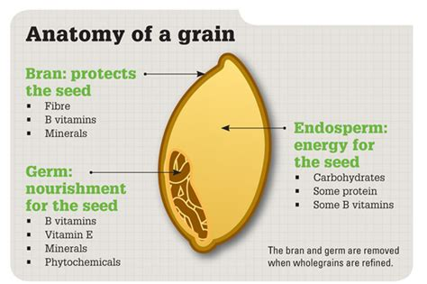 whole grain kernel whole grain diagram whole get free image about wiring
