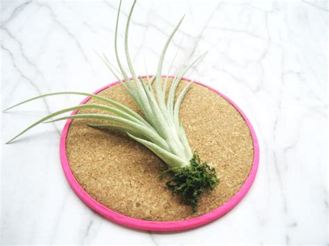 diy what a corker air plant display idea no 2 adorablest