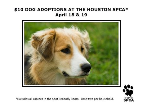 adopt a houston adopt a pet fostering animals pet and animal adoption spca breeds picture