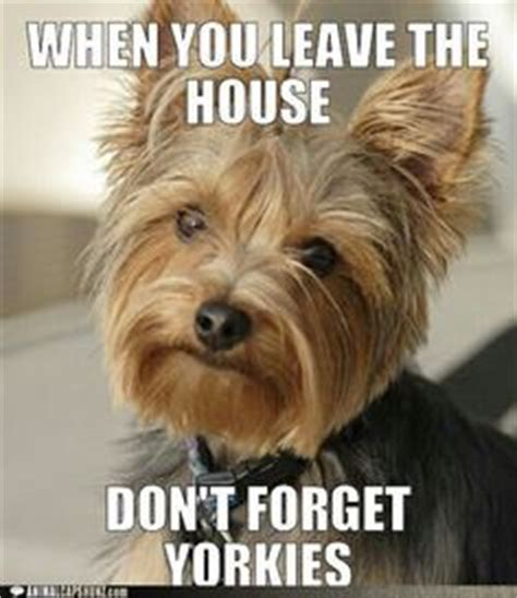 is yorkie and terrier the same 1000 images about yorkie friendzy on yorkie dogs yorkie and