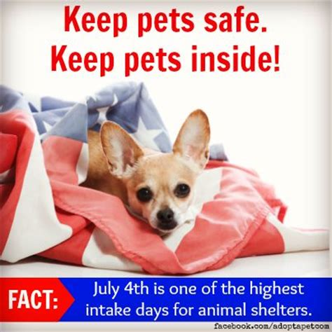 9 Tips On Keeping Your Outside Pet Safe From The Cold by 17 Best Images About Pet Safety On Pet Safe