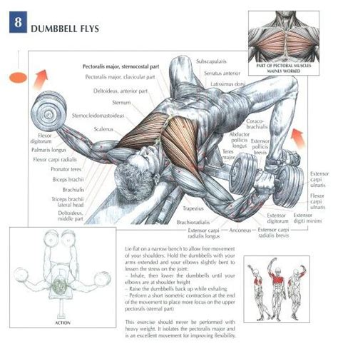 dumbbell exercises diagrams dumbbell flys health fitness exercises diagrams