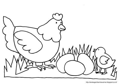 gambar mewarnai ayam untuk anak paud dan tk aneka gambar mewarnai