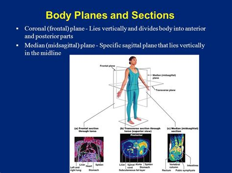body planes and sections the human body an orientation ppt download