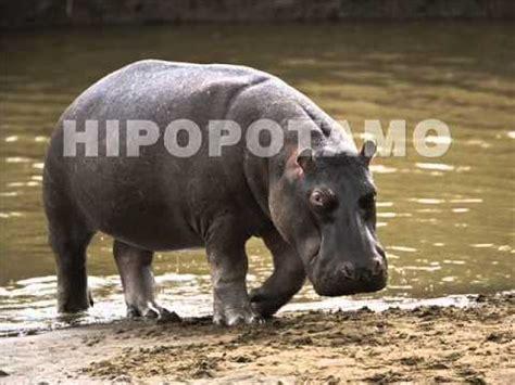 imagenes animales jungla animales de la selva video wmv youtube