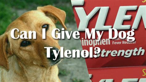 can dogs tylenol tylenol dogs dosage the best 2018