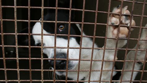 pound dogs sofia s stray firm hits out at s irresponsibility the