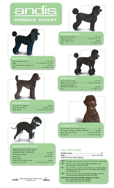 what are yhe different kinds of poodle cuts best 25 poodle grooming ideas on pinterest poodle cuts