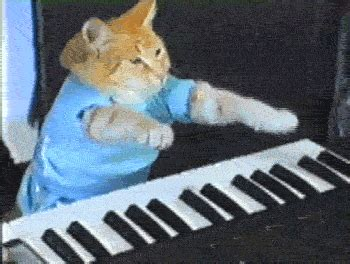 Cat Playing Piano Meme - 15 best cat memes ever