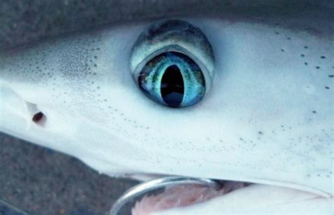 baby shark eyes 30 best animal pictures of the week violet fashion art