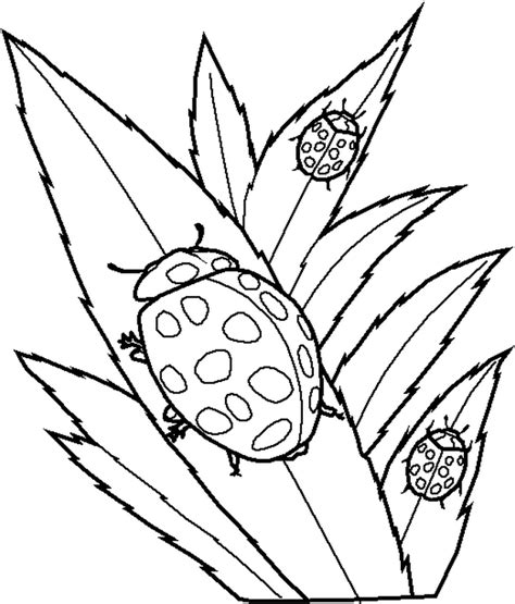 coloring book pages ladybug free printable ladybug coloring pages for kids