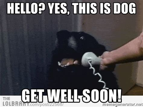 Meme Get Well Soon - hello yes this is dog get well soon hello this is dog