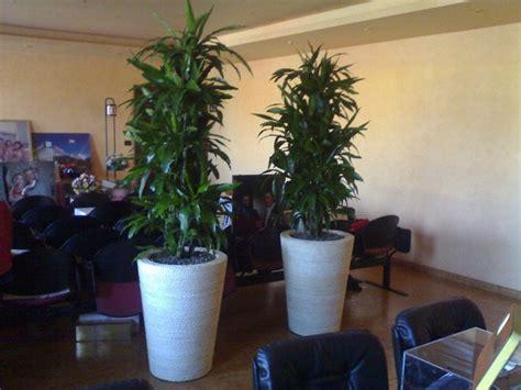 piante ufficio piante ornamentali per l ufficio moncalieri to green