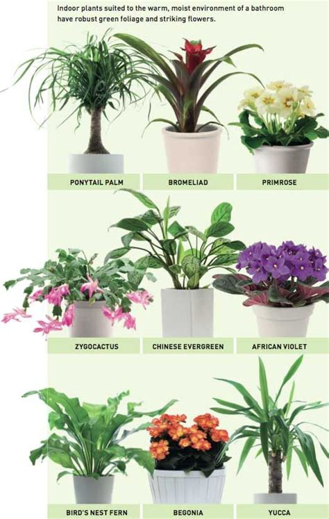 good houseplants good plants for the bathroom i like the african violets