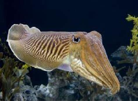 Connor's Blog: Oceanographer's Journal