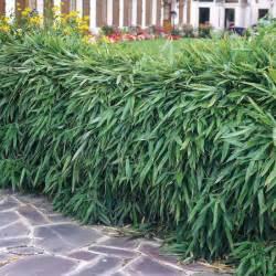 heckenpflanzen ausw 228 hlen und eine sch 246 ne hecke gestalten