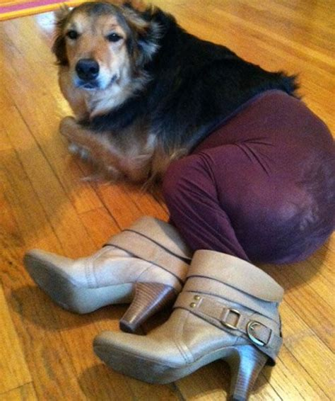 dogs in tights best 25 wearing ideas on eyebrows on dogs