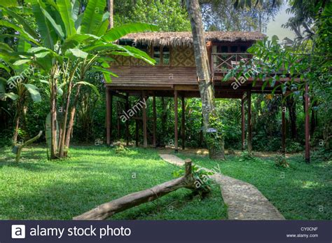 our jungle house tree houses are the specialty of our jungle house khao sok national stock photo