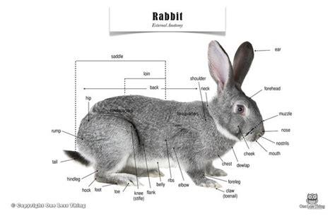Similiar Rabbit Feet Anatomy Keywords