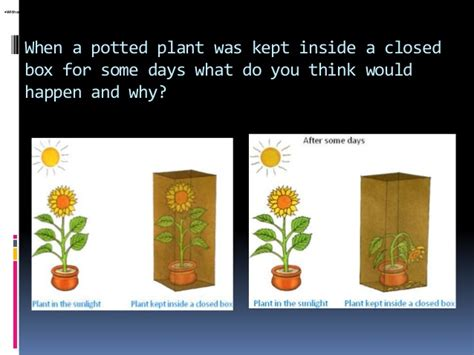 which plants can survive without sunlight all about plants