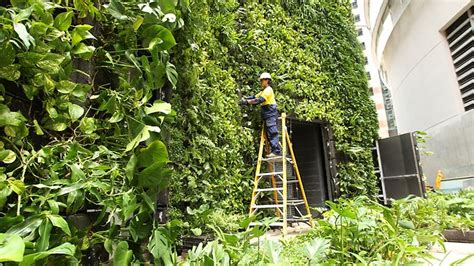 Sydney Vertical Garden Sky S The Limit With Vertical Gardens As Space