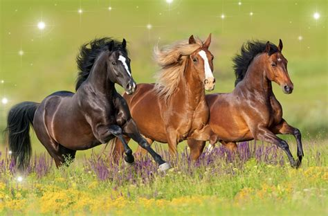 wild horses freedom heart opening activation