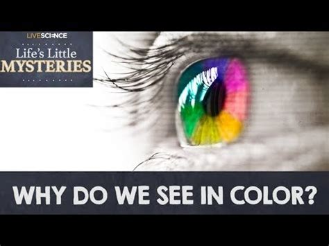 why do we see color why do we see in color