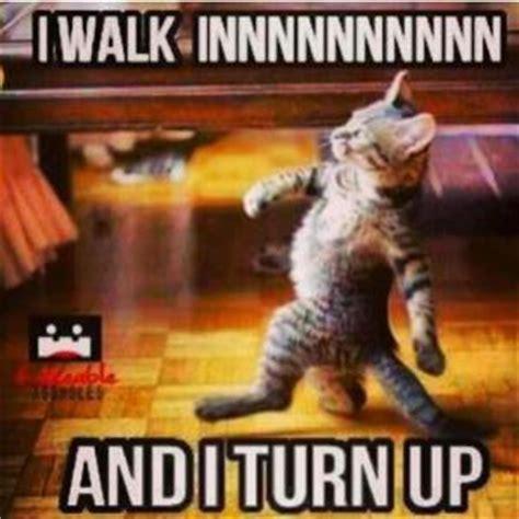 Turn Up Meme - pics for gt turnt up meme cat