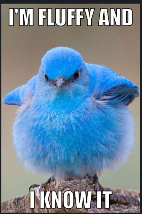 lol    bird      meme  funnies
