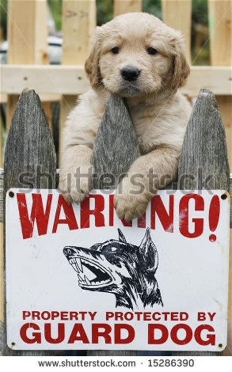 small guard dogs guard dogs quotes