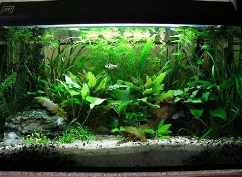Aquarium Ohne Pflanzen Einrichten 6848 by Welche M 246 Glichkeiten Beleuchtung 200x50x50 Aquarium Forum