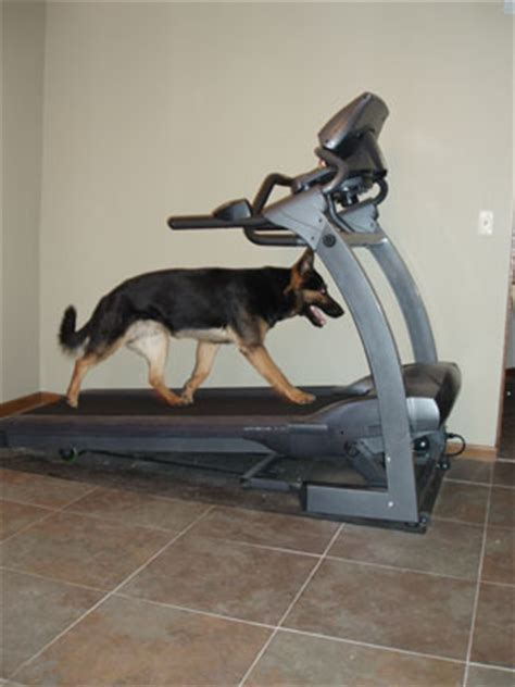 puppy treadmill treadmill recommendations the most important features