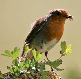 robin norfolk wildlife trust