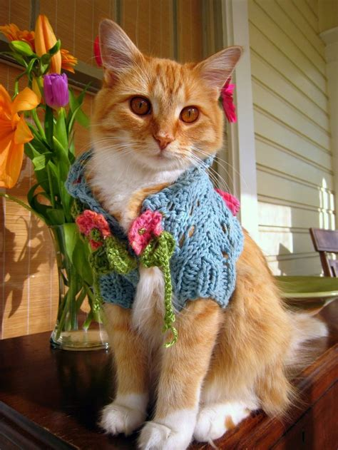 Dress Baby Kucing 375 best images about cats in clothes on cats