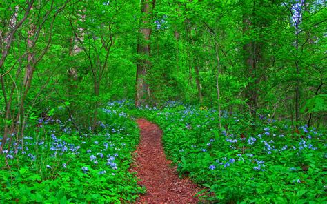 dream spring 2012 spring landscape hd wallpaper 2560 215 1600 dream spring 2012 path in the forest wallpapers hd