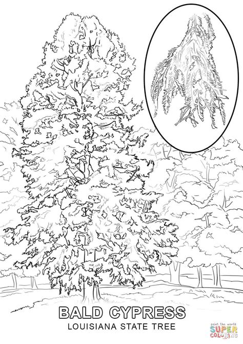 indiana state tree coloring page hawaii state tree coloring page coloring pages