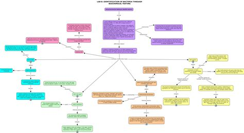 bacterial identification flowchart anaerobic bacteria identification flowchart flowchart in