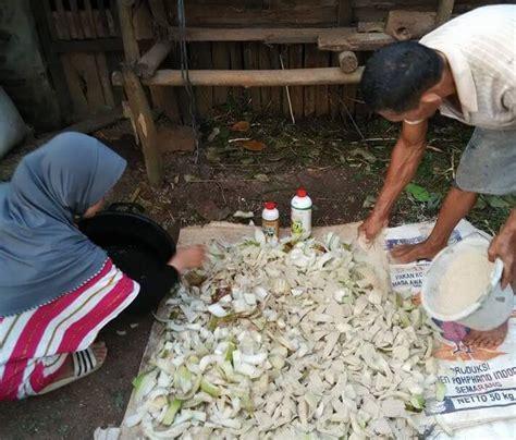 Pakan Ternak Hasil Fermentasi fermentasi pakan ternak dengan produk nasa untuk untung