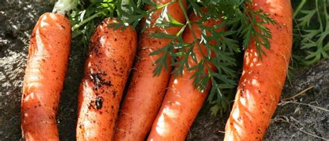 alimenti anticancro cicciottelli it alimenti anticancro le carote