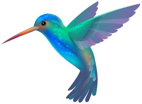 hummingbird clipart pictures clipartix