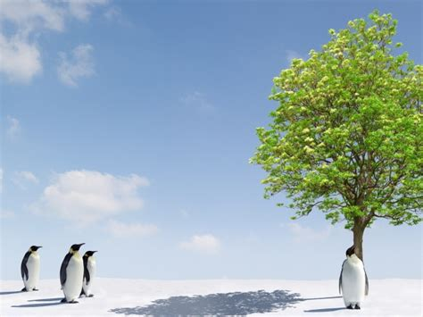 A Tree Miracle Free Green Tree Miracle For Penguins Wallpapers And Images Wallpapers Pictures Photos