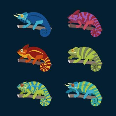colorful chameleon colorful chameleon collection vector illustration
