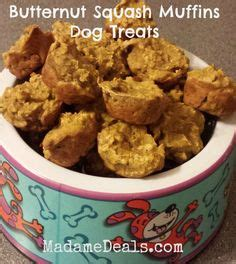 can dogs eat butternut squash 100 recipes for treats on treats for dogs and