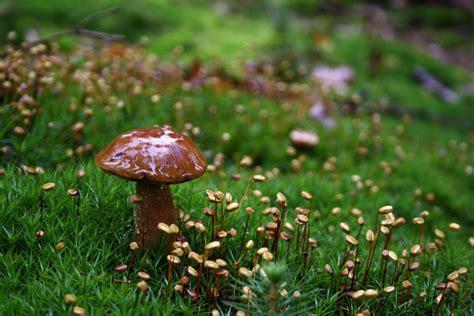 Pilze Im Garten Oktober by De Tag Pilze