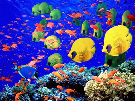 fish for life a all new wallpaper coral reef life fish wallpapers