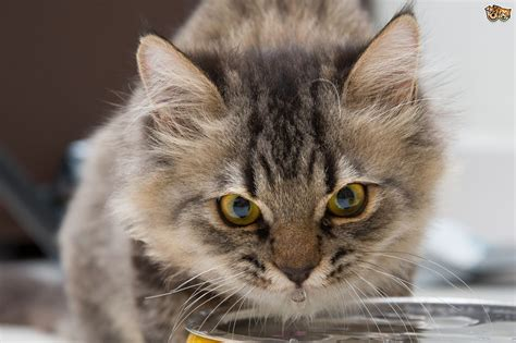 how to tell if your is dehydrated image gallery dehydrated cat